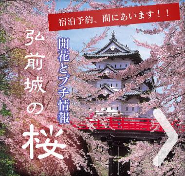 若だんながそっとお教えする、弘前城の桜プチ情報